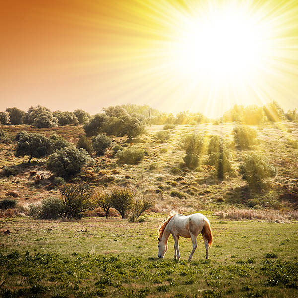 Pasturing Horse Print by Carlos Caetano