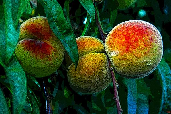 Peaches Print by David Lee Thompson
