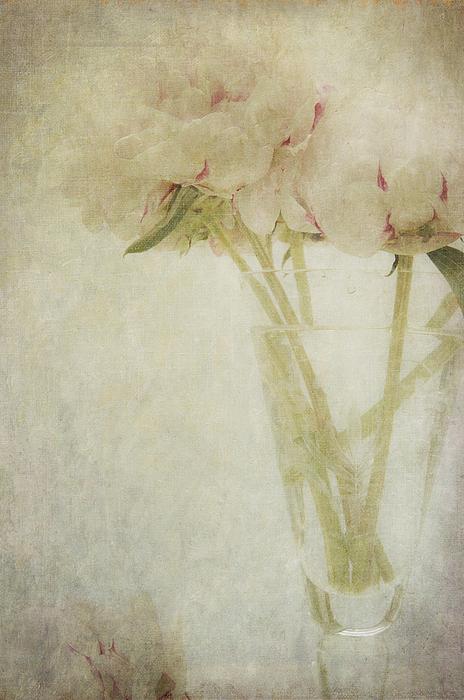 Peonies Print by Marion Galt