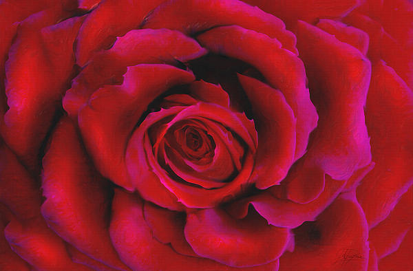 Perfect Rose Print by Joel Payne