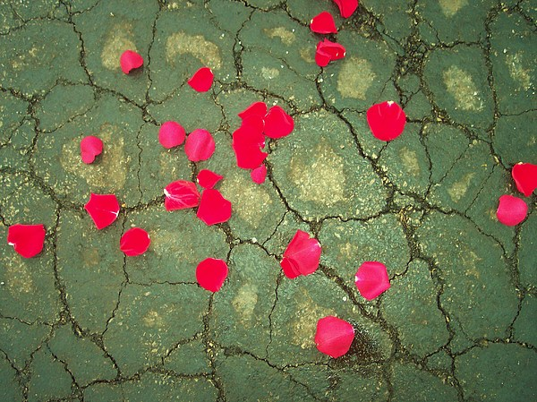Petals On Asphalt Print by Anna Villarreal Garbis