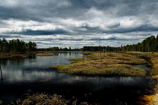 Pine Barrens Print by Louis Dallara