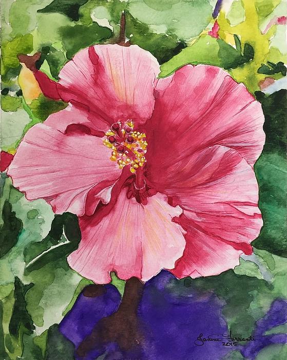Janine Ferranti - Pink Hibiscus