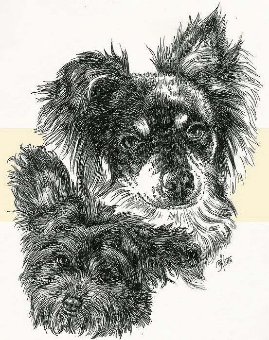 Pomapoo Father And Son Print by Barbara Keith