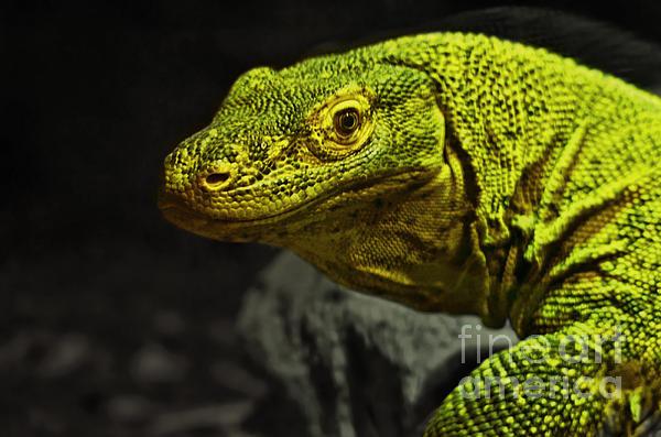 Jim Fitzpatrick - Portrait of a Komodo Dragon
