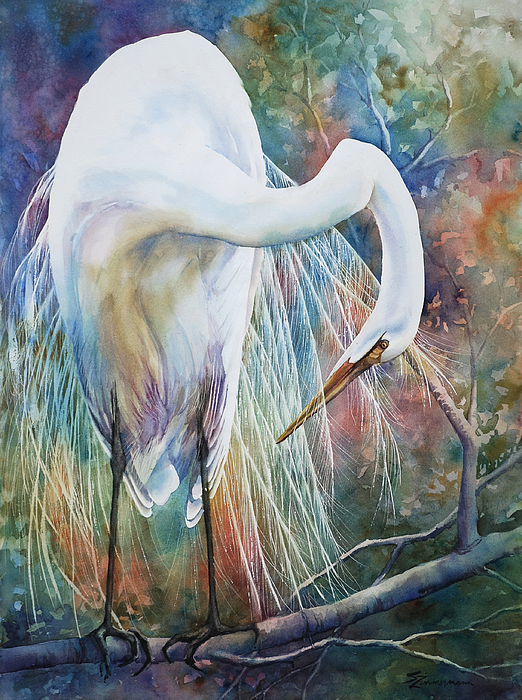 Preening Egret Print by Sue Zimmermann
