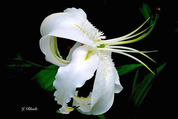Jeannie Rhode Photography - Pretty White Flower