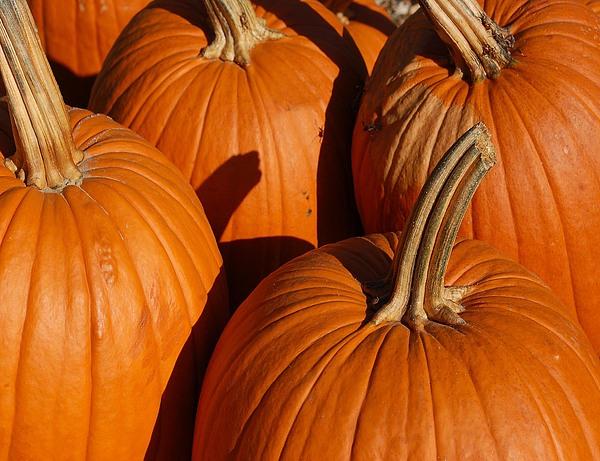 Pumpkins Print by Michael Thomas