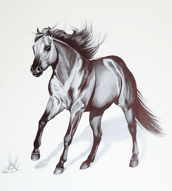 Quarter Horse At Lope Print by Cheryl Poland