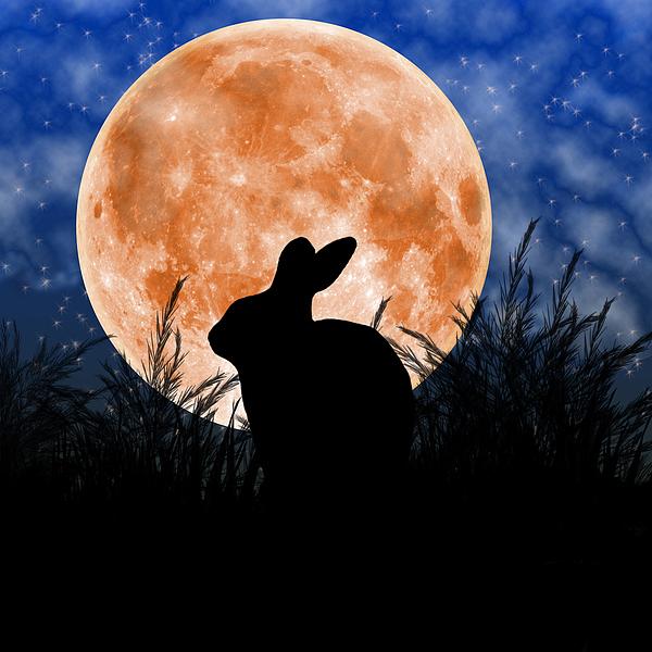 Rabbit Under The Harvest Moon Print by Elizabeth Alexander
