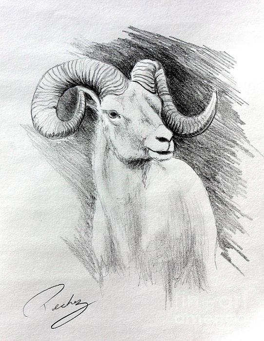 Pechez Sepehri - Ram-2