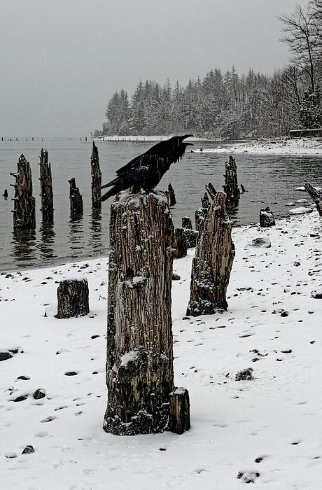 Cathy Mahnke - Raven Call