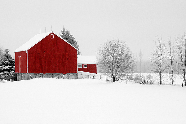 Red Barn Winter Landscape Print by Cathy  Beharriell