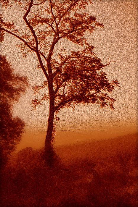 Red Dawn Print by Linda Sannuti