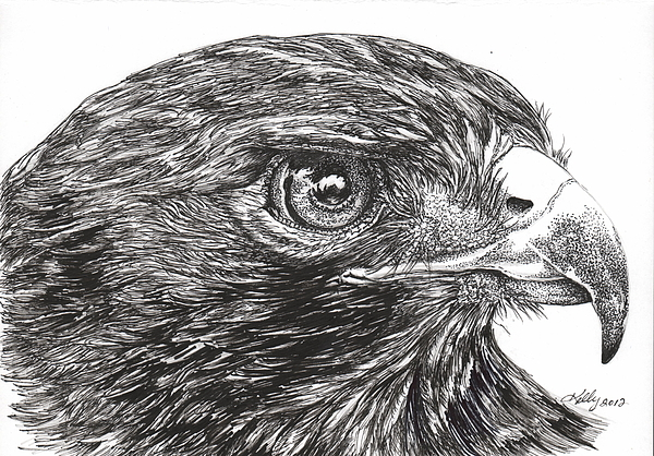 Red Tail Hawk Print by Kathleen Kelly Thompson