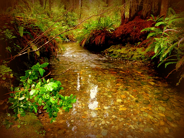 Cindy Wright - Redwood Stream Reflections