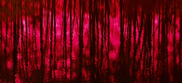 Reflections Print by David Lane