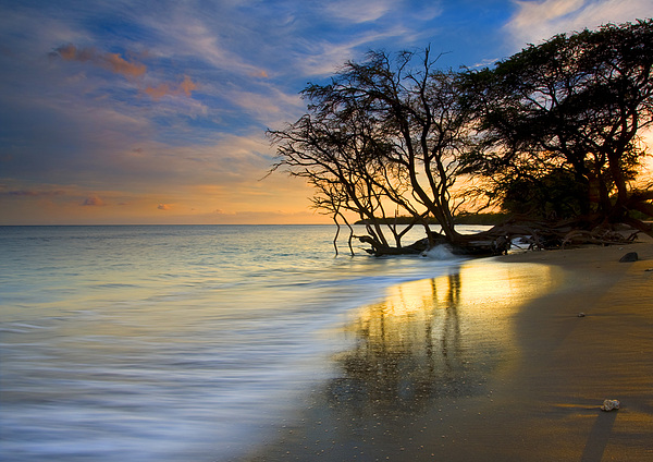Reflections Of Paradise Print by Mike  Dawson