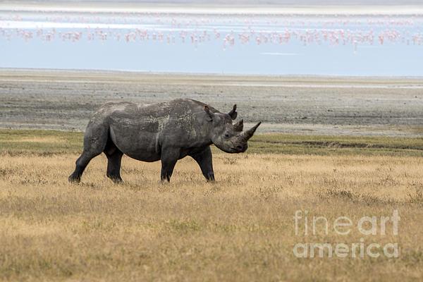 Pravine Chester - Rhino in Ngorongoro