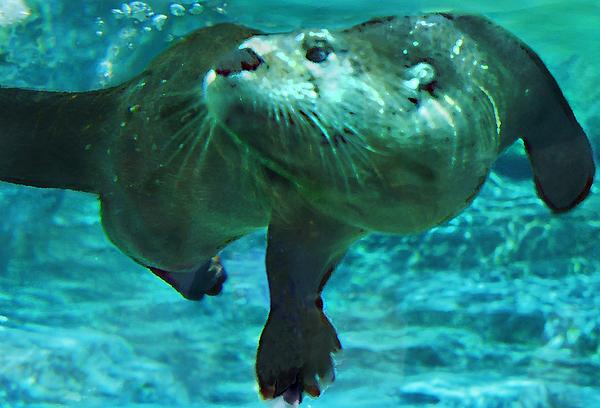 River Otter by Steve K...