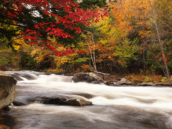 River Rapids Fall Nature Scenery Print by Oleksiy Maksymenko