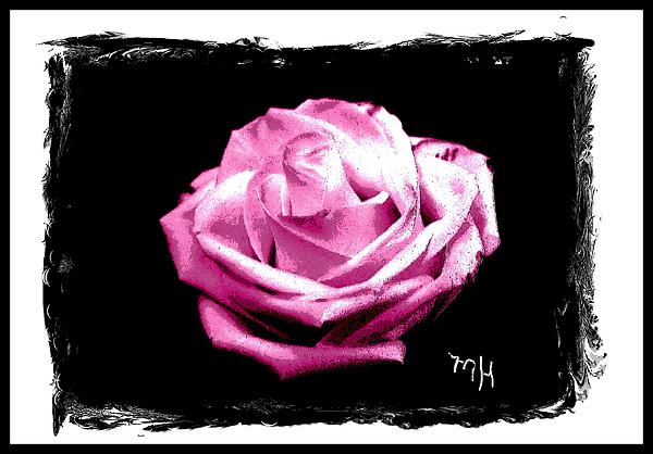 Rose On Black Print by Marsha Heiken