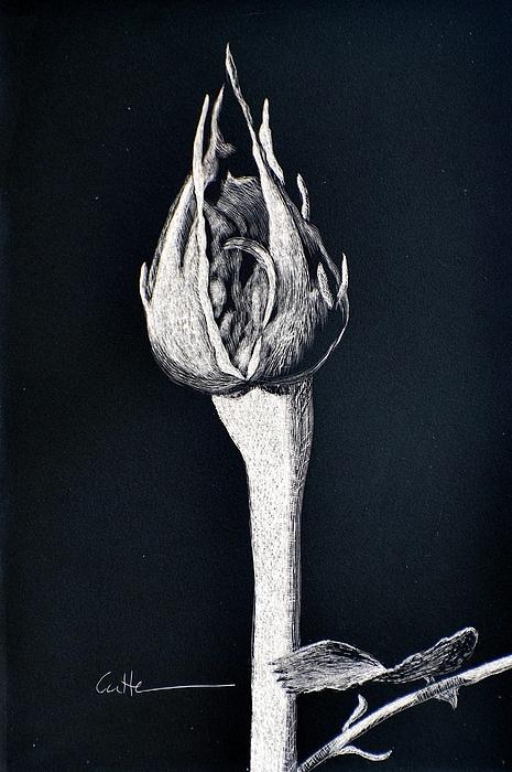 Rosebud Print by Diane Cutter