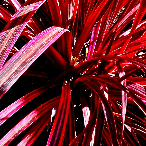 Ruby Blades by Bonnie See