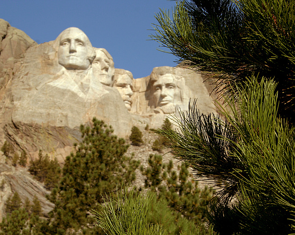 Rushmore Pine Needles Print by Mike Oistad