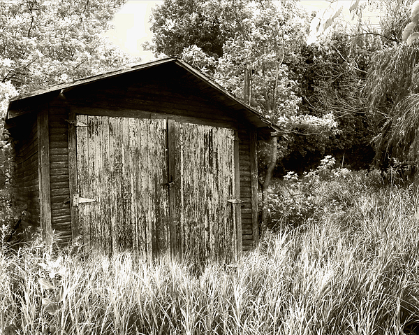 Rustic Shed Print by Perry Webster