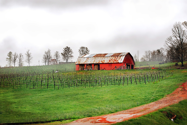 Rustic Wine Print by Robert Smith