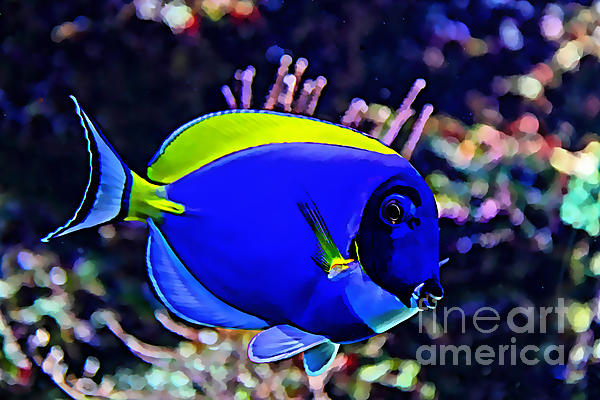 Saltwater fish blue tang print by marvin blaine