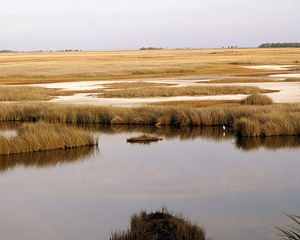 Saltwater Marsh Print by Marty Koch