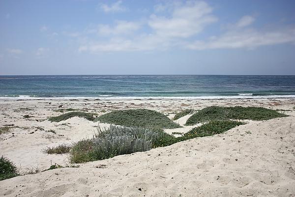 Sand And Sea Print by Carol Groenen