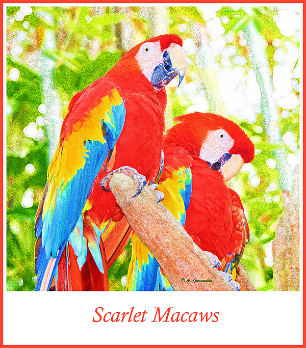 Scarlet Macaw Pair by A Gurmankin