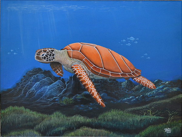 Anthony Fotia - Sea Turtle III
