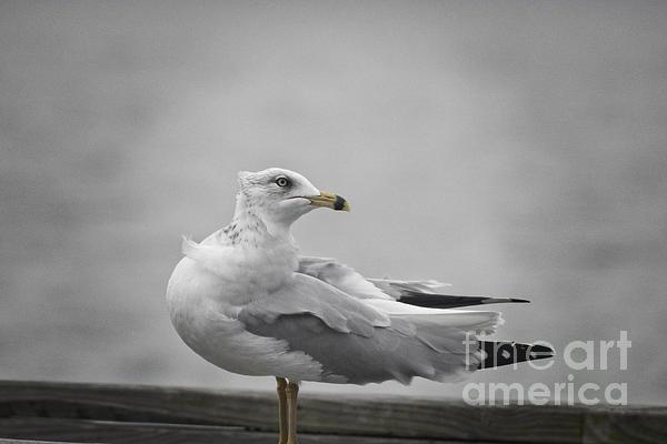 Ella Kaye Dickey - Seagull at the Marina