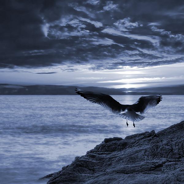 Seagull Print by Jaroslaw Grudzinski