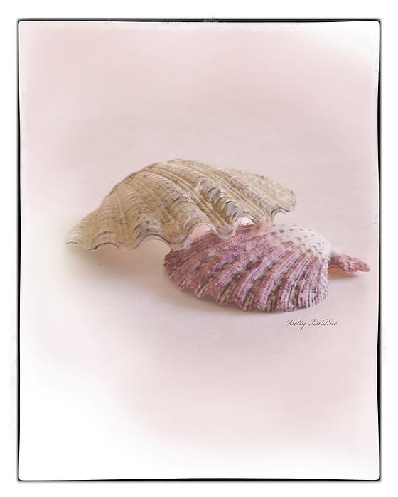 Seashell Love Print by Betty LaRue