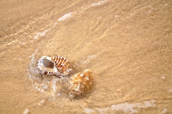 Seashell Turbulence Print by Kaye Menner