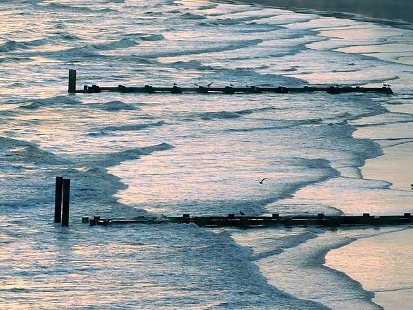 Arlane Crump - Seashore Design