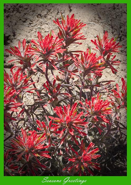 Seasons Greetings 2010 Print by Daniel Hebard