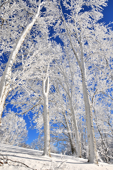 Serious Rime Frost Print by Alan Lenk