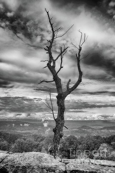 Dawn Gari - Single Tree In Black and White