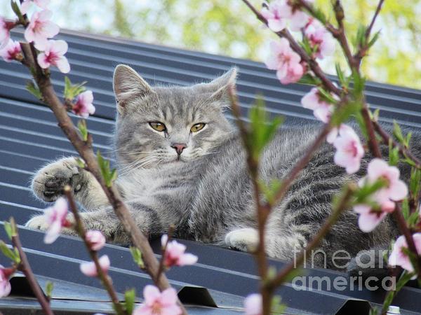 Vesna Martinjak - Sivko enjoying the spring