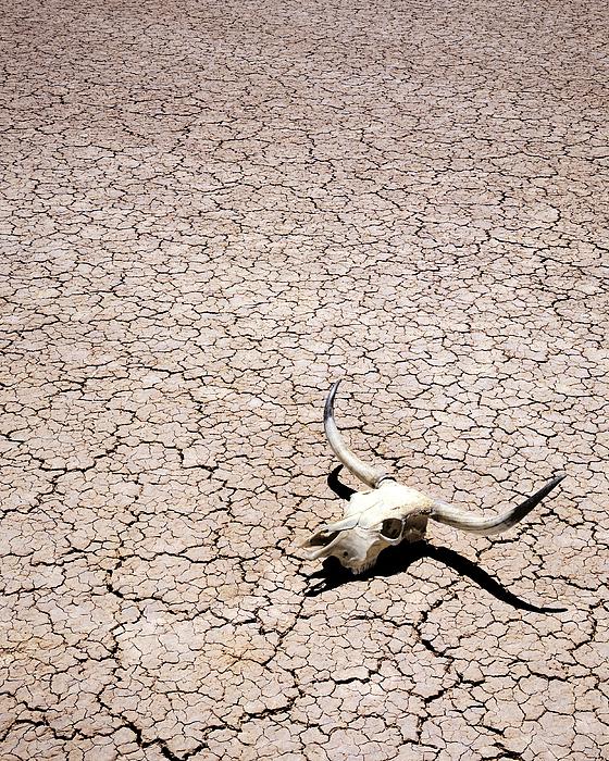 Skull In Desert Print by Kelley King