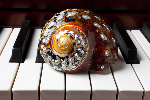 Snail Shell On Keys Print by Garry Gay