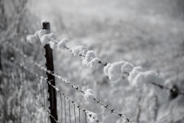 Lacey Wirkus - Snowy Fence