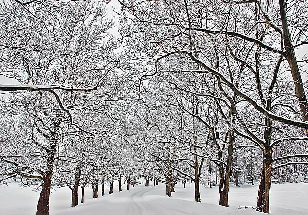 Aimee L Maher Photography and Art Visit ALMGallerydotcom - Snowy Treeline
