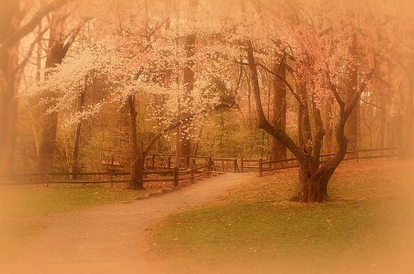 Sometimes - Holmdel Park Print by Angie Tirado